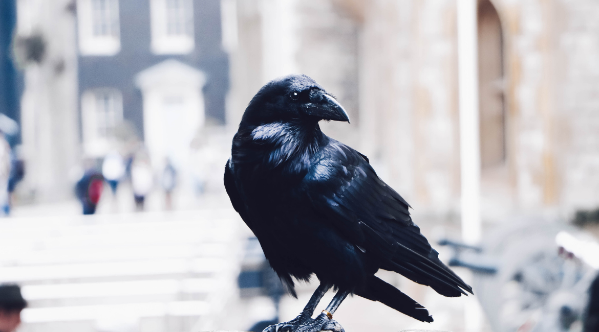 Tower of London Raven Wolf Hall by Hilary Mantel